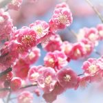 宇宙パワーと共鳴する☆【上弦の月】月が牡牛座へ入宮2月4日(土)