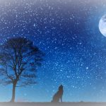 【水瓶座の新月】〇〇の体験はあなたを研ぎ澄ます~西洋占星術&チャネリング~