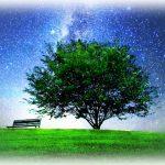 【新月・日食・獅子座】~宇宙パワーと共鳴する~